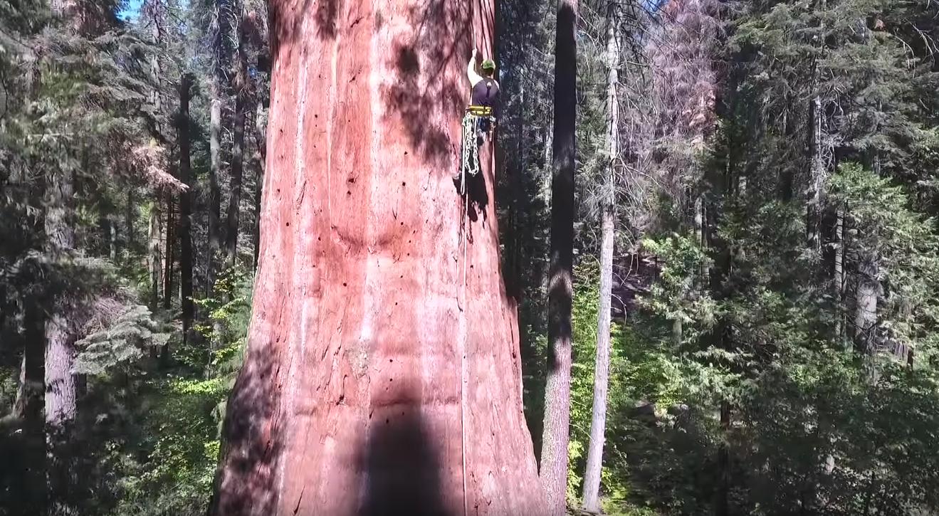 Tree Climbing Shoes