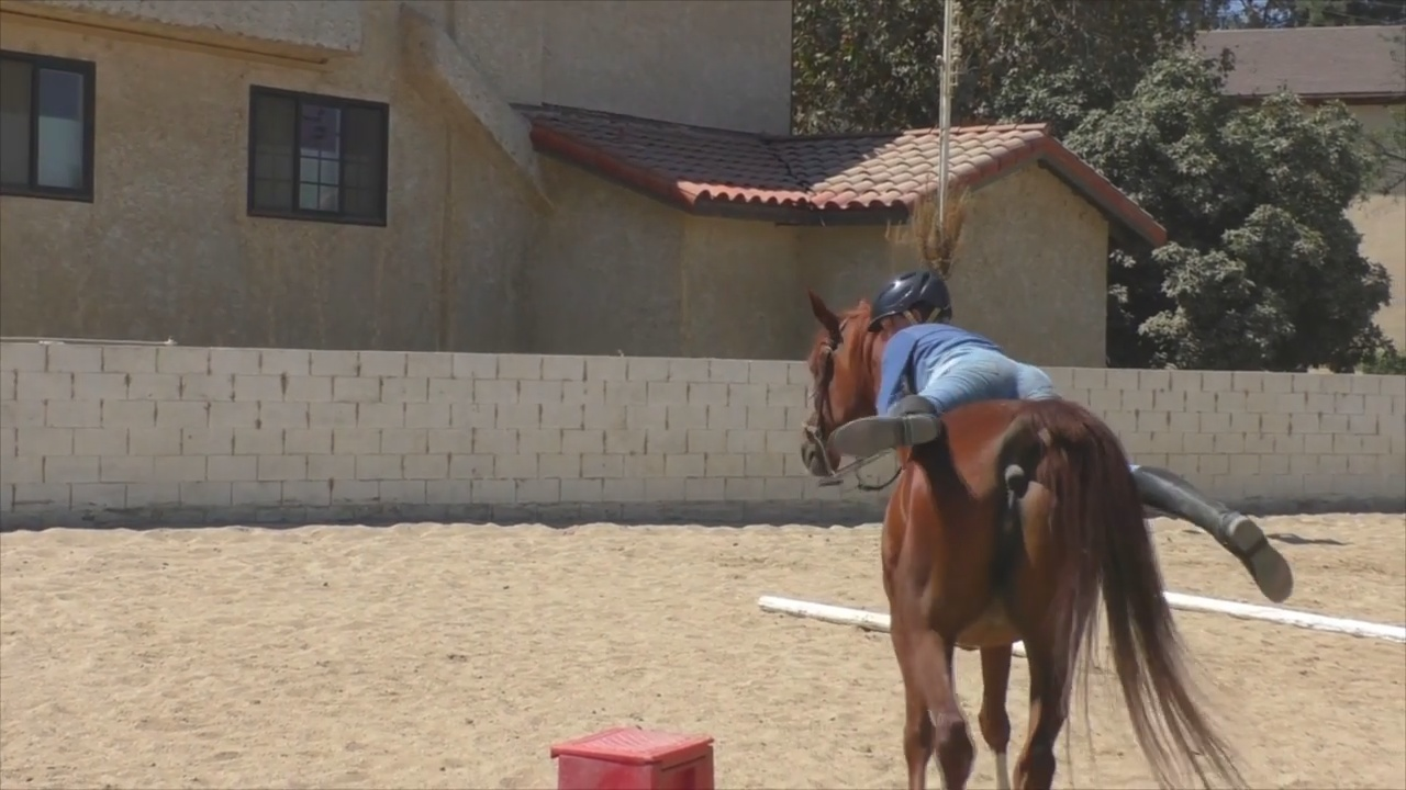 Horse Stables Near Me